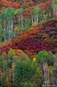 Colorful Hillside print