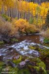 Colorado streams, Fall, aspen tree photos, gold, stream, White River National Park,Colorado waterfall pictures