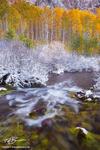 Colorado streams, Fall, aspen tree photos, gold, stream, White River National Park,Colorado waterfall pictures,snow,snowy,Colorado aspen tree photographs,creek, river,mossy, mossy rocks,autumn,autumna