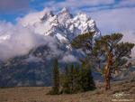 Grand Teton Photographs,Old Patriarch Photos,Old Patriarch tree image,tetons,Grand Teton National Park photos, Old Patriarch photos, Wyoming, Grand Teton National Park, Grand Tetons,