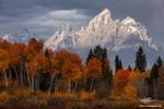 Wyoming,Grand Teton Photos,Grand Teton National Park,Fall Foliage, Fall Colors, Autumn,Autumnal,gold,stormy,clouds,cloudy,Grand Teton National Park Pictures
