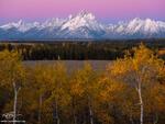 Wyoming, Grand Teton National Park Photos, Grand Tetons, Grand Tetons Photos, snow, snowy, aspens, aspen trees, sunrise, Grand Teton National Park, gold, orange, pink, fall, autumn, Grand Teton Fall p