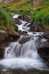 Colorado,waterfall,waterfalls,water fall, water falls,flower,flowers,wildflower,wildflowers,uncompahgre national forest
