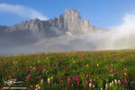 Sunrise,Wildflowers,Photograph,Mountain pictures,Colorado image,fog,Colorado Mountains,Wetterhorn Peak photos