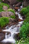 Wildflowers, Cascade, Colorado waterfall photos, Mountain photo, Picture, Image, Waterfall