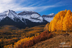 Autumn colors,Gold Aspen trees,mountain sunrise,mountain picture,Colorado Photos,Sneffels Range photos,Sneffels Range pictures,Colorado fall image