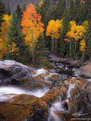 Colorado, Colorado fall photos, aspens, aspen trees, tree, trees, colorful, fall foliage, fall colors, fall, autumn, gold, red, orange, colorado fall foliage, fall colors