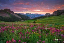 Colorado wildflower photographs, mountain picture,mountains pictures,Colorado Mountains,Uncompahgre photos,Mountain Sunrise image