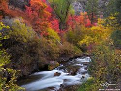 Idaho, Idaho photo,Idaho streams,fall colors, autumn picture,creek,river,calm,autumn, fall, colorful,autumn image, Idaho fall photos, Idaho fall photography, Idaho Fall pictures,red, orange, yellow