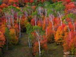 Idaho, autumn picture,Aspen tree photos,Maple tree pictures,scrub oak images,Colorful trees,Idaho fall colors,autumn photo,fall,autumnal,autumn
