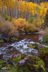 Colorado streams, Fall, aspen tree photos, gold, stream, White River National Park,Colorado waterfall pictures