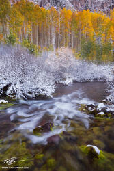 Colorado streams, Fall, aspen tree photos, gold, stream, White River National Park,Colorado waterfall pictures,snow,snowy,Colorado aspen tree photographs,creek, river,mossy, mossy rocks,autumn,autumna
