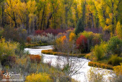 Wyoming, Grand Tetons, Grand Teton National Park photos, Cottonwood trees, fall, autumn grand teton fall colors, river, streams, fall foliage
