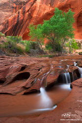 Utah,Waterfalls,Glen Canyon,Spring,Escalante National Monument,Coyote Gulch pictures,Coyote Gulch photos