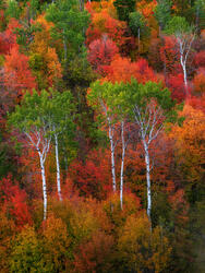 autumn picture,Aspen tree photos,Maple tree pictures,scrub oak images,Colorful trees,Idaho fall colors,autumn photo