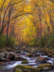 North Carolina, Fall, Autumn, Fall Foliage, Fall Colors, Great Smoky Mountains National Park, Smoky Mountains Photos, Smokies, Smoky Mountains Fall photos, River, Big Creek, Stream, Streams, water, sm