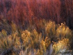 Utah, Desert, Desert photos, Desert Southwest, Southwest, Capitol Reef, Capitol Reef National Park photos
