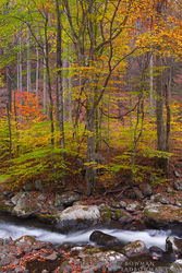 Smoky, Mountains, Smokies, Smokey, National Park, Images, Picture, Fall, Autumn