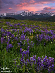 Colorado, Colorado Wildflower photos, Gore Mountains, Mountains, Sunset, Lupine, flowers, flowers, wildflower, wildflowers, Colorado mountain photos, blue