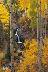Colorado pictures, Nellie Creek Waterfall photos, Aspen Trees, Gold, San Juan Mountains