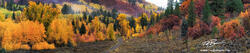 Colorado, Gunnison National forest, Aspen Tree photos, Colorado fall photos, pano,panorama,panoramas, fall, autumn, snow,orange,yellow,tree,trees,forest,autumnal