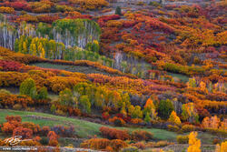 Colorado,fall,autumnal,aspen tree photos, aspen trees,scrub oak,scrub oak photos,red,green,orange,gold,Uncompahgre National Forest,Polychromatic,colorful,color,colors