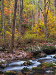Tennessee, Fall, Autumn, Fall Foliage, Fall Colors, Great Smoky Mountains National Park, Smoky Mountains Photos, Smokies, Smoky Mountains Fall photos, River, Rivers, Stream, Streams, water, smokey