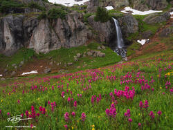 Colorado, Mountain Photos, Indian Paintbrush photos, pink, waterfall, waterfalls, wildflower photos, wildflowers,flower, flowers, mountains, photographs, images, pictures, Colorado Mountain photos
