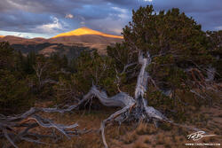 Colorado, Mount Silverheels,silverheels, pike national forest, bristlecone trees, tree,colorado mountain photos,sunset,orange,pictures,image,mount silverheels photos,summer,pine tree,bristlecone,storm