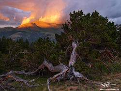 Colorado, Mount Silverheels,silverheels, pike national forest, bristlecone trees, tree,colorado mountain photos,sunset,orange,pictures,image,mount silverheels photos,summer,pine tree,bristlecone,color