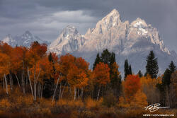 Wyoming,Grand Teton Photos,Grand Teton National Park,Fall Foliage, Fall Colors, Autumn,Autumnal,gold,stormy,clouds,cloudy,Grand Teton National Park Pictures