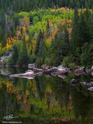 Colorado, Fall, Colorado aspen tree photos, Colorado Fall Photos, aspen trees, aspen tree reflection, Rocky Mountain National Park, colorful,autumn