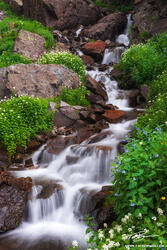Wildflowers, Cascade, Colorado waterfall photos, Mountain photo, Picture, Image, Waterfall