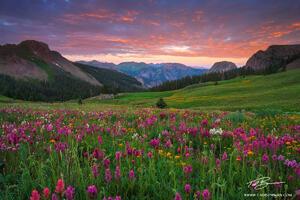 Colorado Wildflower Photos