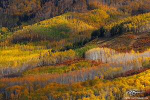 Colorado Forests,Trees, and Wildernesses
