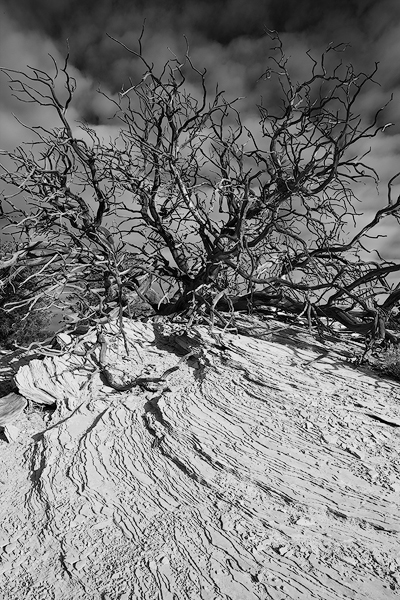 Utah black and white photo,Desert Photo,Southwest picture, Perseverance,Canyonlands National Park pictures, photo