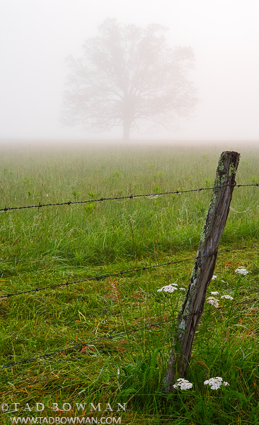 Tennessee Pictures,smokey mountains,Cades Cove photos, Foggy Tree photos,Smoky Mountains images, photo