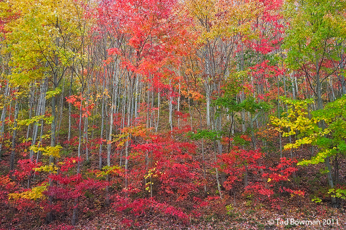 ree photos,forests pictures,pictures of forests,Fall,Autumn picture,Cherokee National Forest pictures,cherokee fall,cherokee autumn, photo