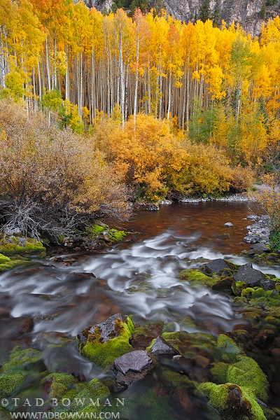 Colorado streams, Fall, aspen tree photos, gold, stream, White River National Park,Colorado waterfall pictures, photo