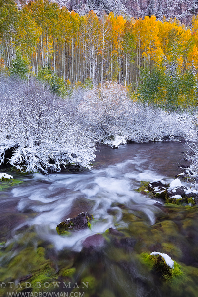 Colorado streams, Fall, aspen tree photos, gold, stream, White River National Park,Colorado waterfall pictures,snow,snowy,Colorado aspen tree photographs,creek, river,mossy, mossy rocks,autumn,autumna, photo