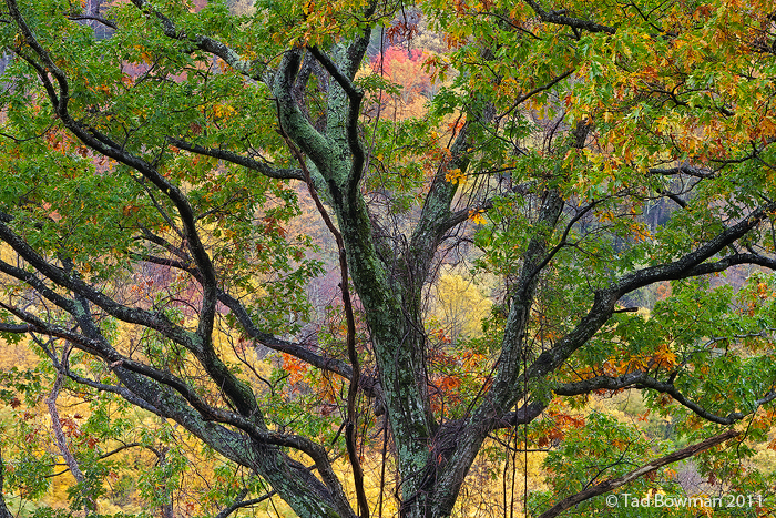 Tennessee images,fall,autumn,tree,fall foliage Great Smoky Mountains National Park,smokies fall,pictures,photos, photo