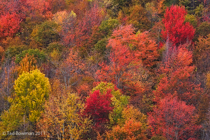 tree photos,forests pictures,pictures of forests,Fall,Autumn picture,Cherokee National Forest pictures,cherokee fall,cherokee autumn, photo