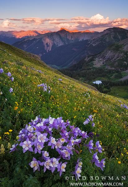 Mountain Wildflower photos,Colorado Columbine photos, mountain picture,Colorado Mountain Sunset,Columbine pictures,flower image, photo