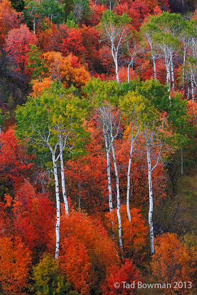 autumn picture,Aspen tree photos,Maple tree pictures,scrub oak images,Colorful trees,Idaho fall colors,autumn photo, photo
