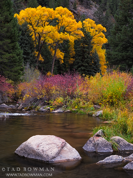 Colorado photos,Fall foliage pictures,Autumn,Gold, Gunnison National Forest,fall,Cottonwood Tree photos,Cottonwoods,colorado fall photos,colorado autumn photos,colorado fall photos, photo