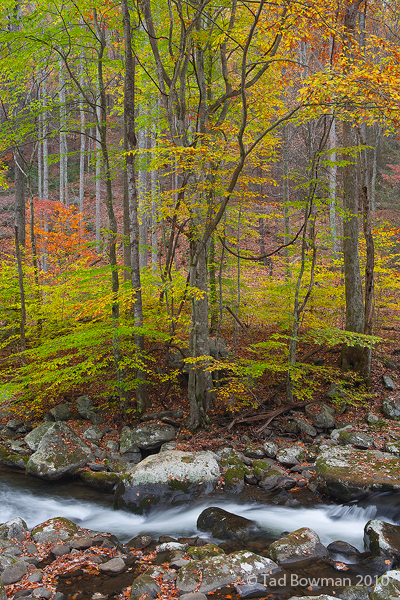 Smoky, Mountains, Smokies, Smokey, National Park, Images, Picture, Fall, Autumn, photo