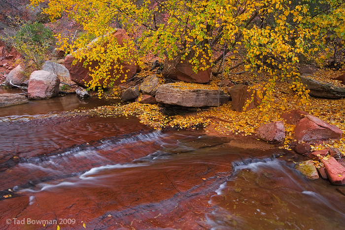 Southwest,Utah,fall colors photo,Autumn picture,Yellow trees, Zion National park photos,left fork river pictures,left fork, photo