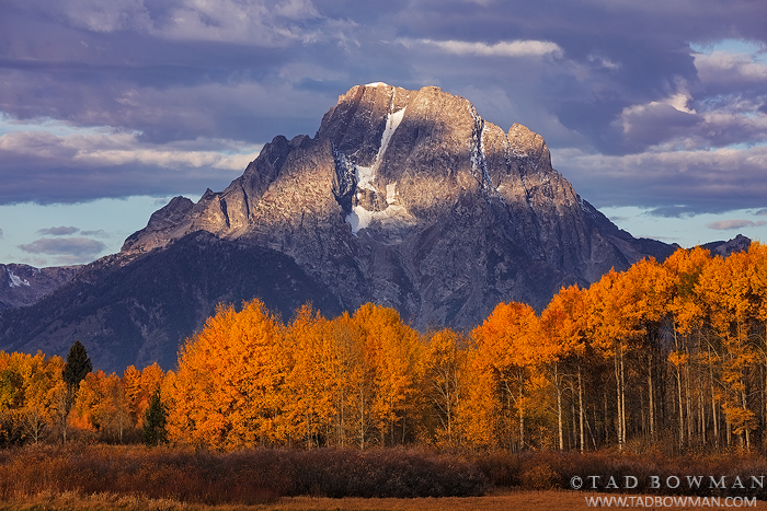 Mount Moran photos,Fall Colors,Autumn,Aspen trees,Grand Teton National Park,tetons,mount moran pictures,moran photographs, photo