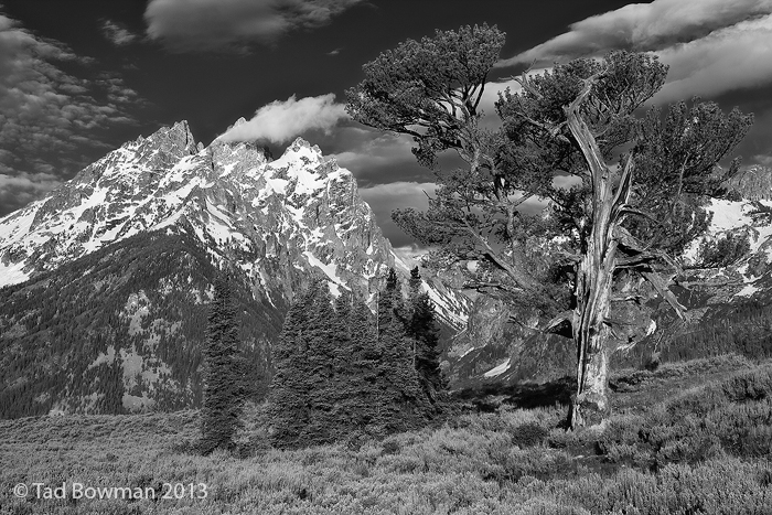 Grand Teton Photographs,Old Patriarch Photos,Old Patriarch tree image,tetons,Grand Teton National Park pictures, photo