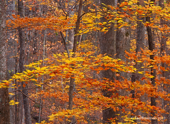 Fall,Autumn,Smokies pictures,Trees,Colors,Picture National Park, Image,Smoky Mountains photos,tennessee images, photo